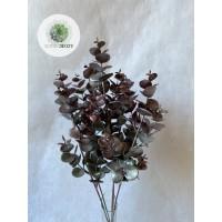 Eukalyptus bokor ezüst-mályva
