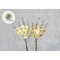 Orchidea kötegelt csokor x6  (CSOMAG ÁR!)