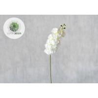 Orchidea 105cm