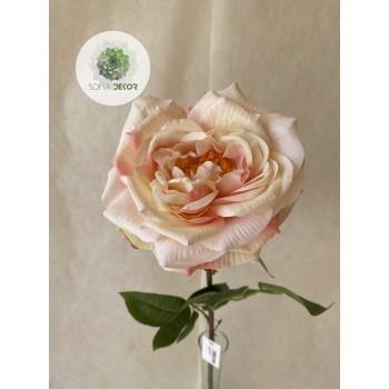 Angolrózsa rózsaszín, krém
