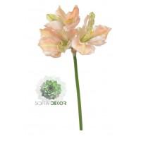 Amarillis x3 rózsaszín-zöld