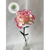 Szegfű krém-rózsaszín 66cm