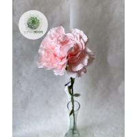 Szegfű rózsaszín 66cm