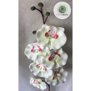 Orchidea 78cm (db ár!) CSAK CSOMAGRA RENDELHETŐ!