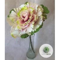 Káposztavirág rózsaszín-zöld