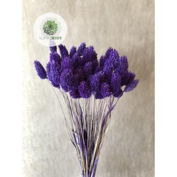 Fénymag lila