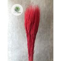 Búza szakállas piros