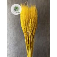 Búza szakállas sárga