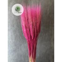 Búza szakállas rózsaszín