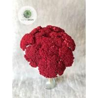 Achillea piros
