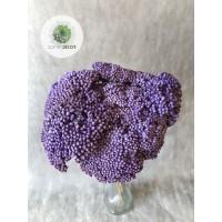 Achillea lila