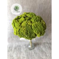 Achillea zöld