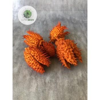 Beléndek narancs