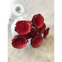 Protea margaréta piros