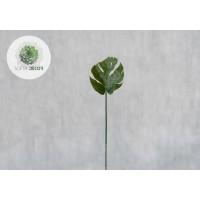 Philodendron levél