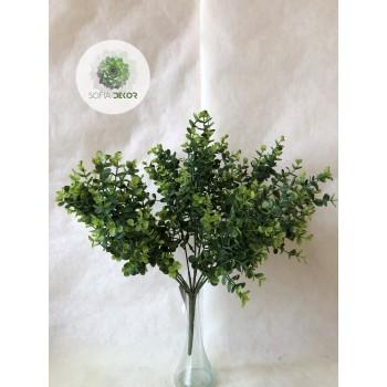 Eukalyptus bokor x9