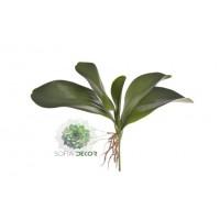 Orchidea levél (5leveles)