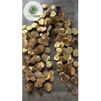 Eukalyptus futó arany