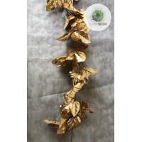 Arany leveles futó