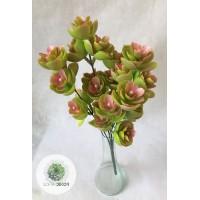 Kőrózsa bokor x5 rózsaszín-zöld