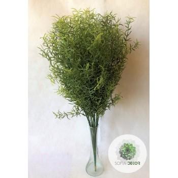 Asparagus x24 (KÖTEG ÁR!)